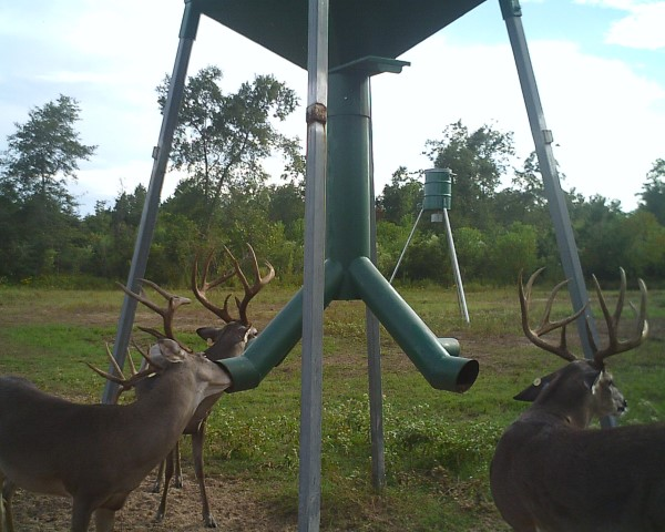two deer at feeder
