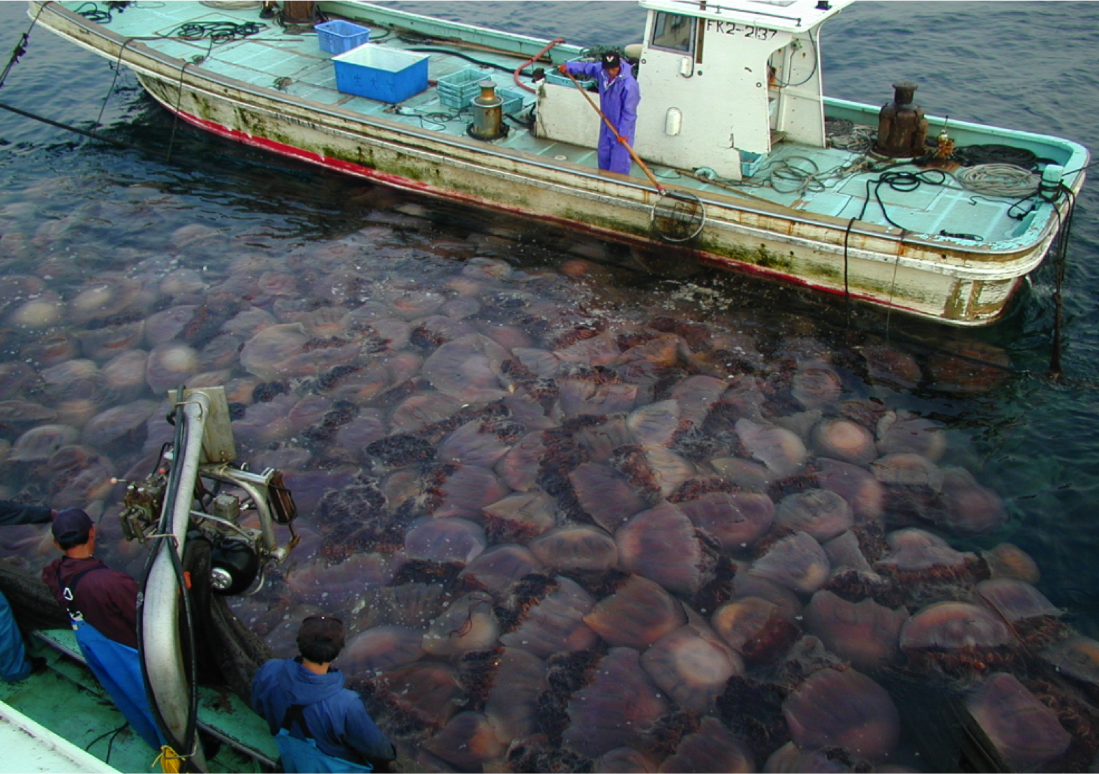 Jellyfish-Facts-boat-swarm.jpg