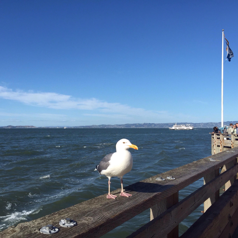 Pier 39 resident.