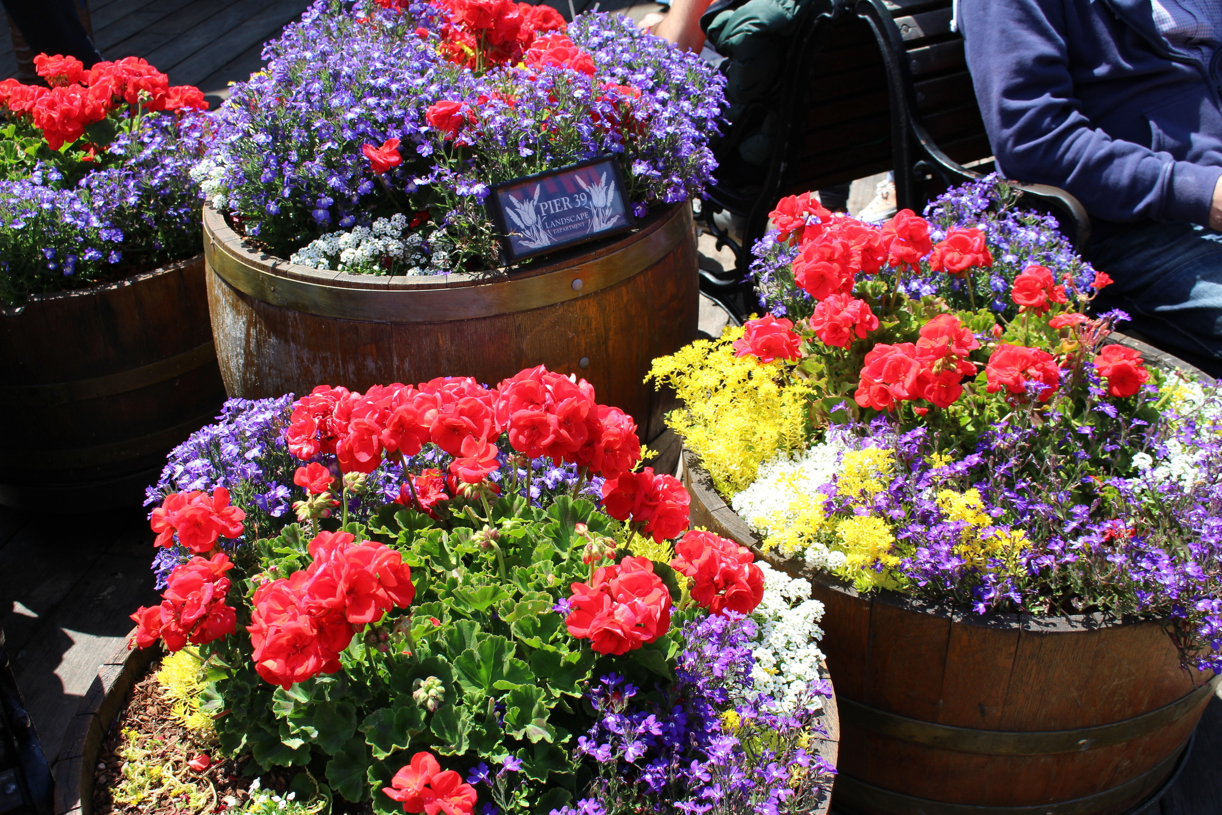 Amazing and colorful flowers at Pier 39.