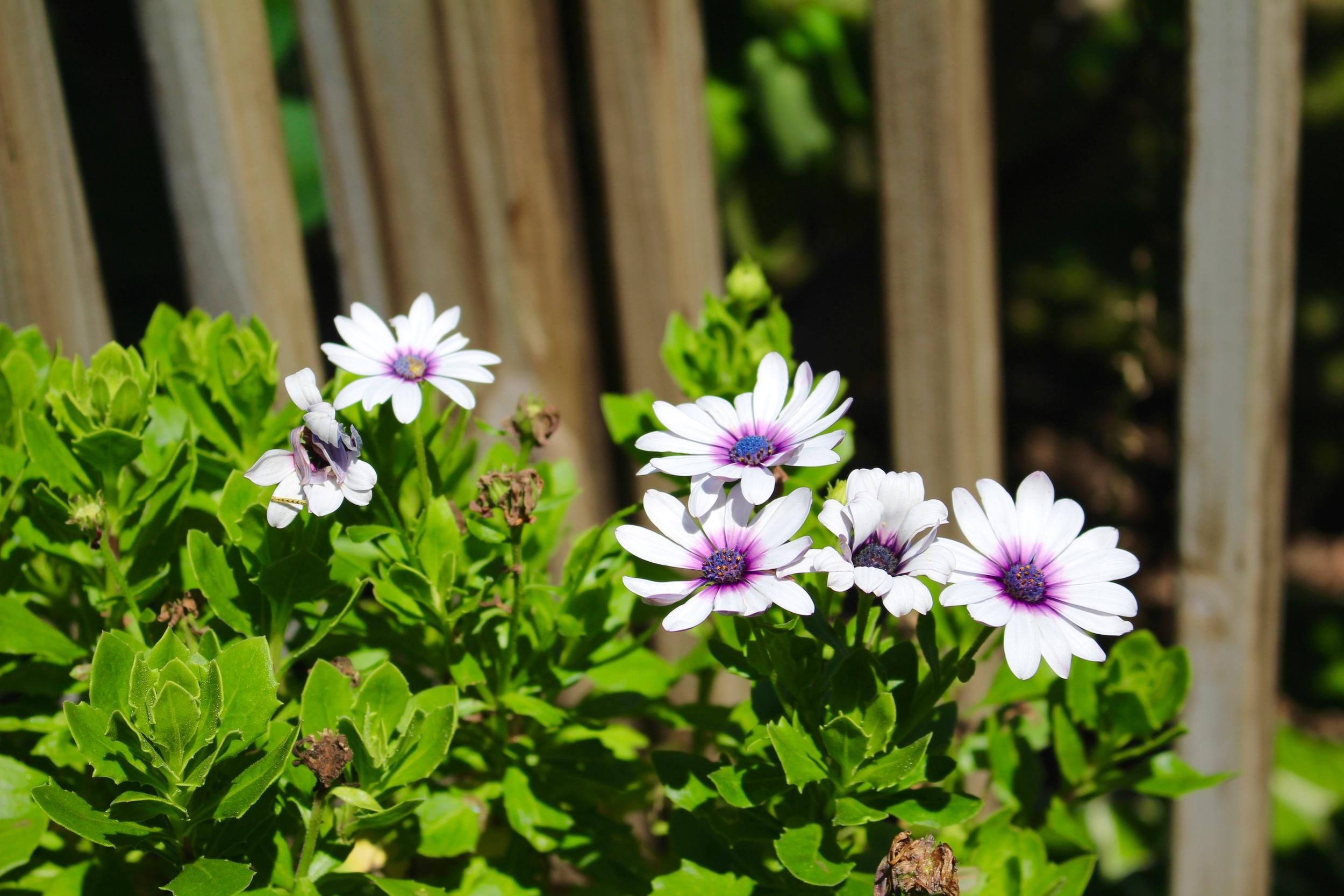 Pretty flowers^.^