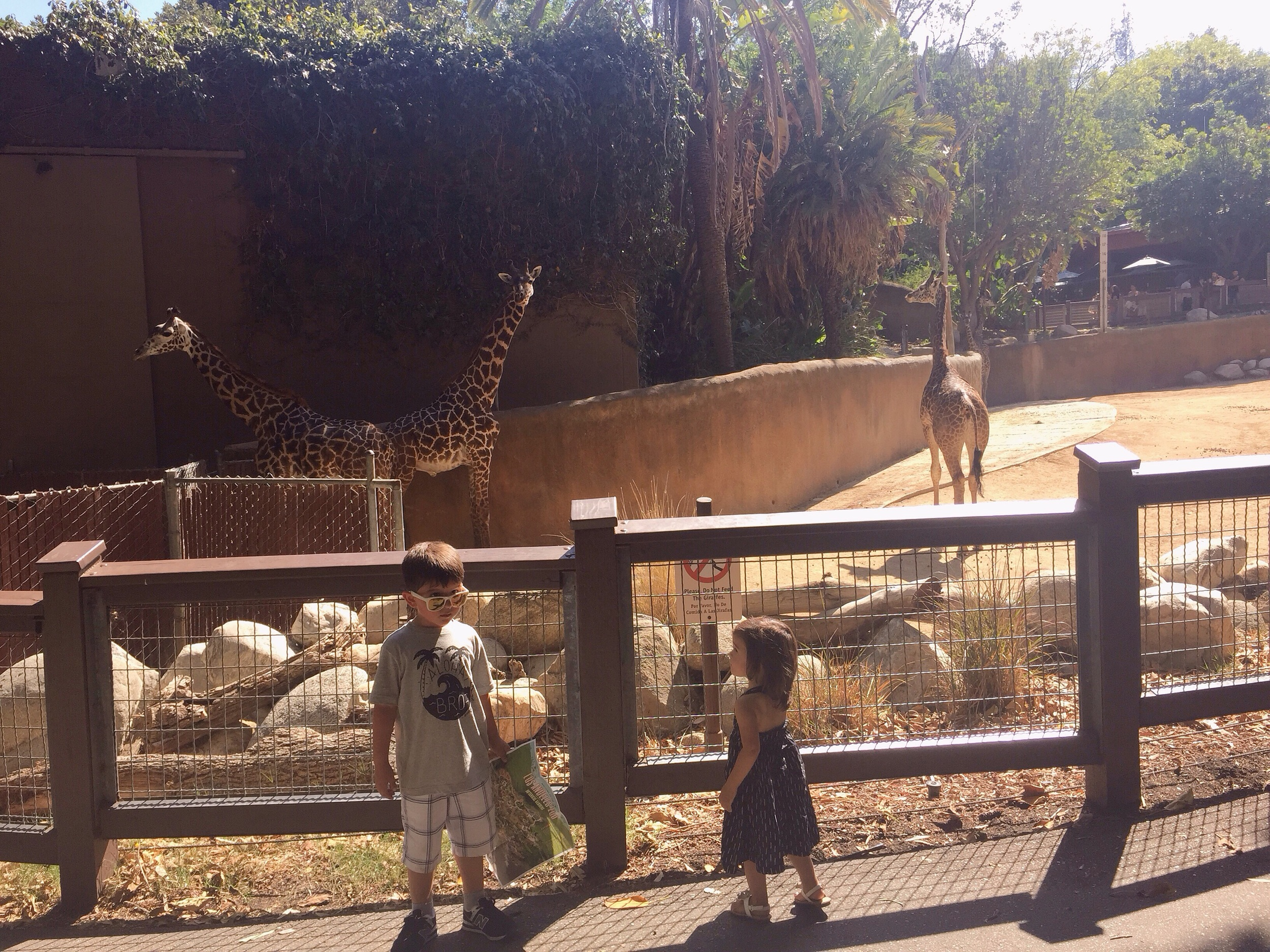 Dominika loved the giraffes