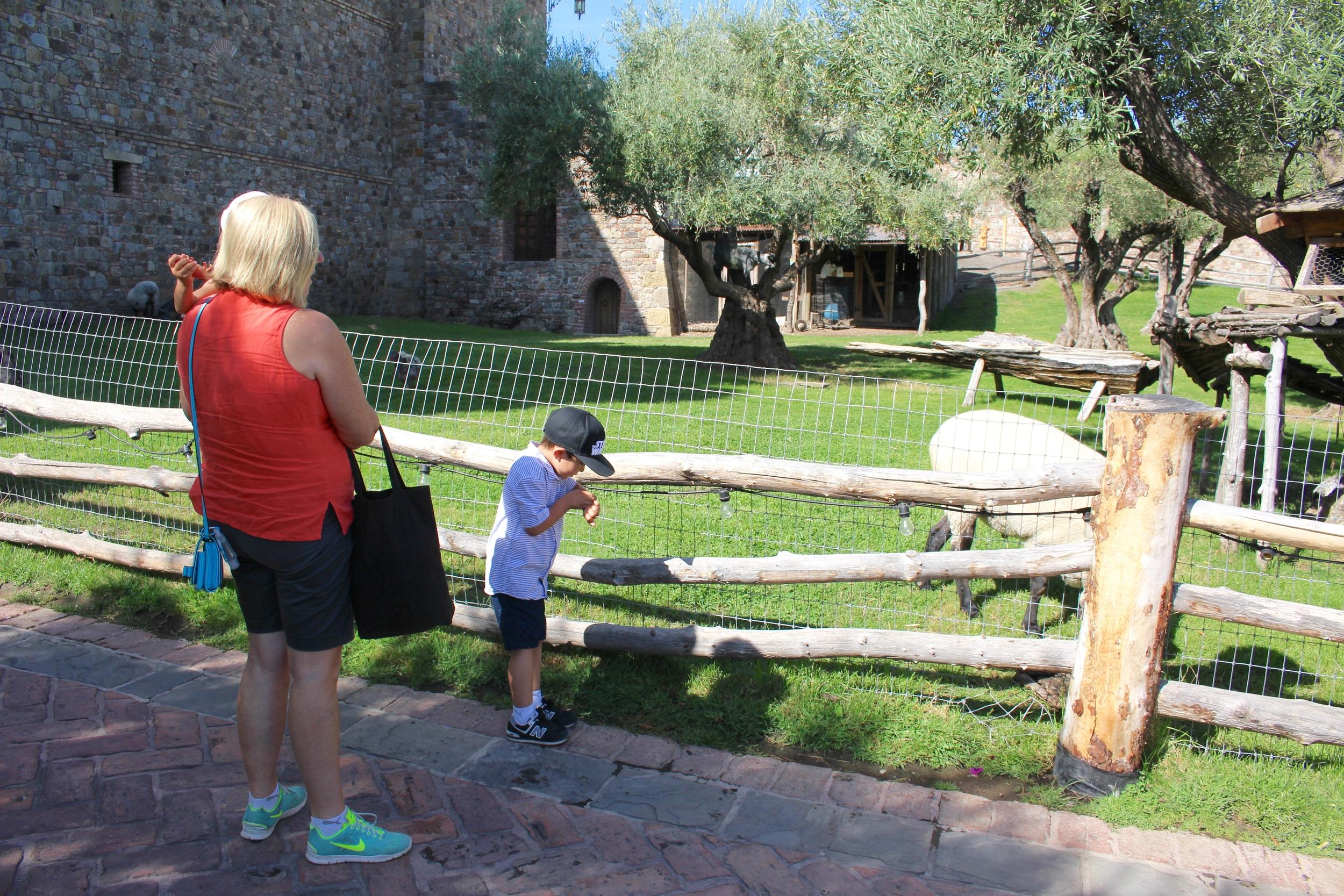 snapping photos of sheep ^.^