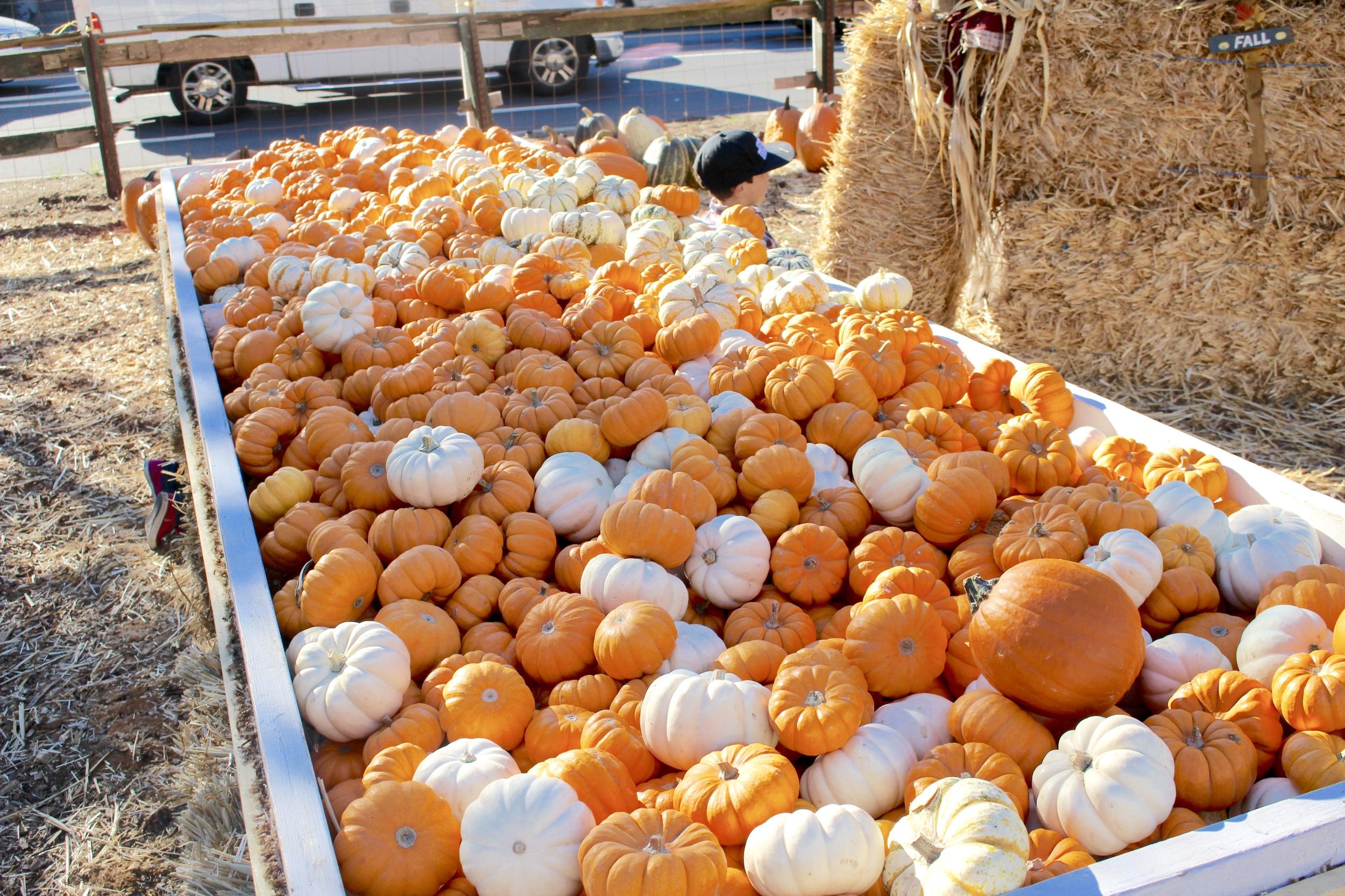 Pumpkinssss!