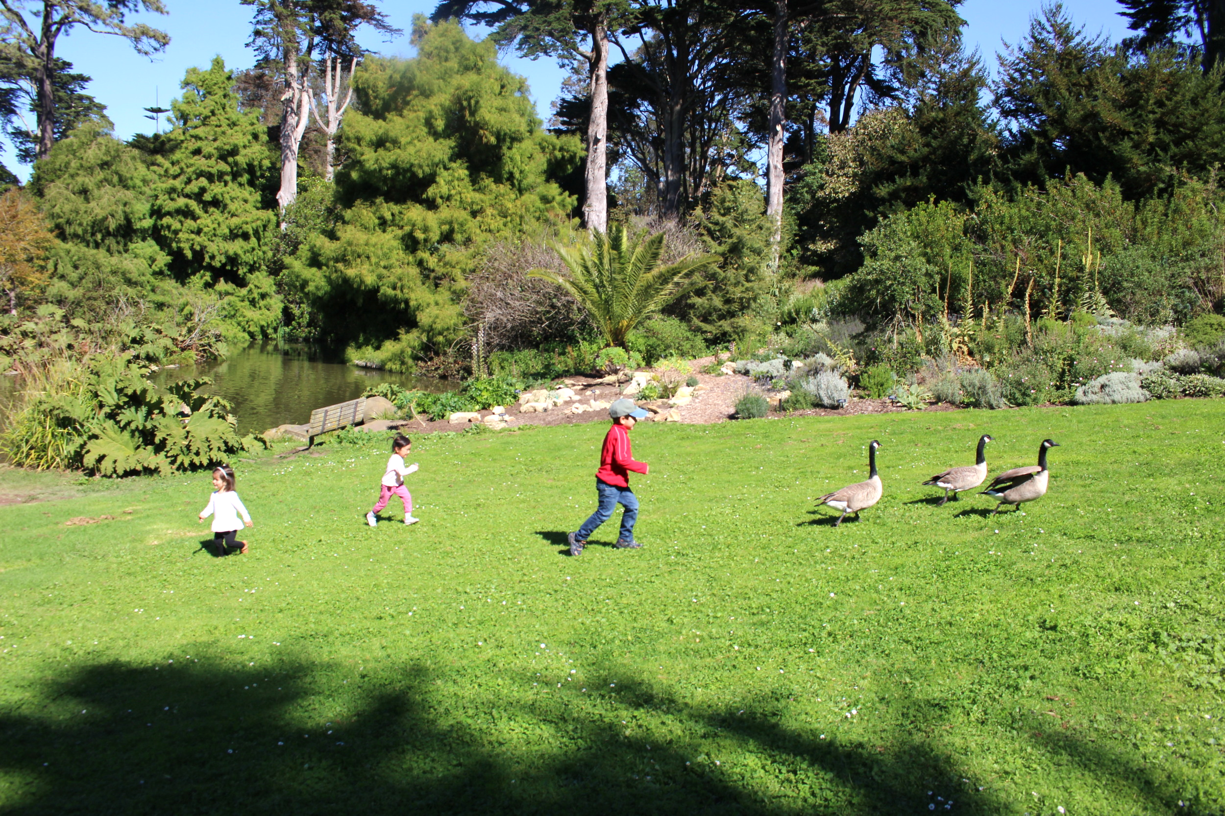 kids chasing the geese.