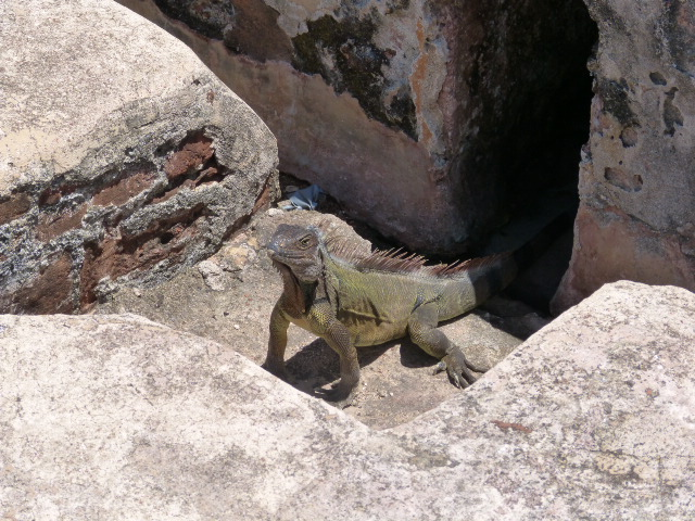 This guy caused more than one tourist to beat a hasty retreat to another part of the fort!