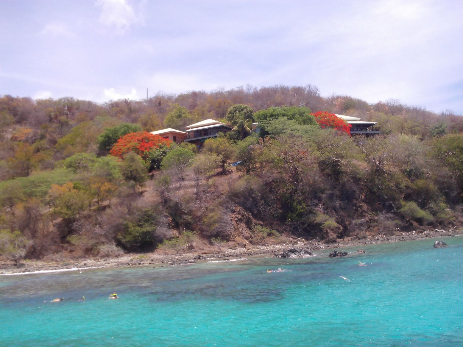 The reef, island houses, and two blooming  flamboyán trees