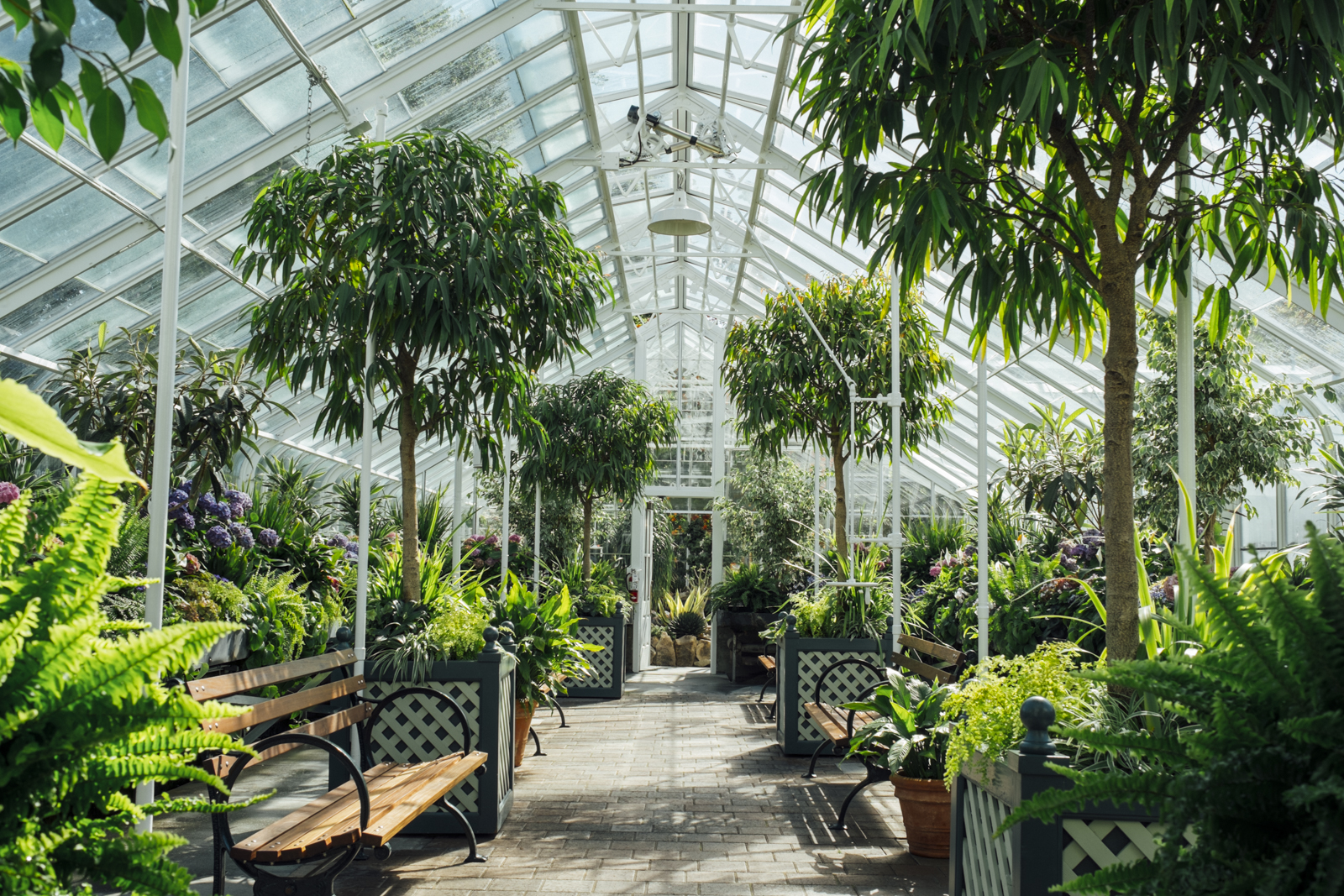 Volunteer park conservatory   in Seattle, WA by photographer Dylan Priest