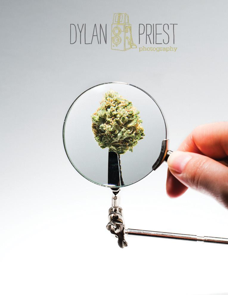 cannabis_promo_v2-5.jpg