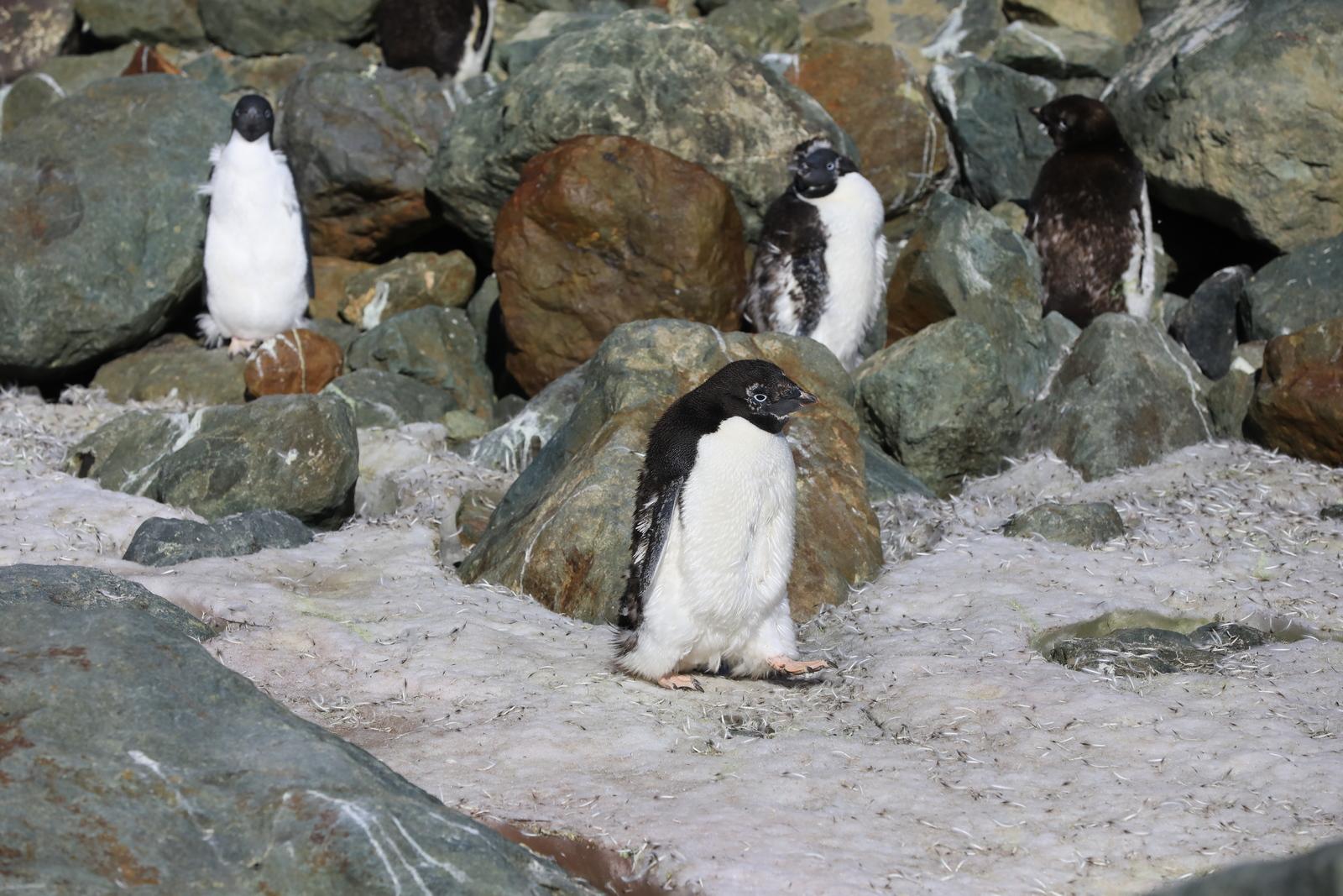 1702_Antarctique_01820_c_sm.jpg