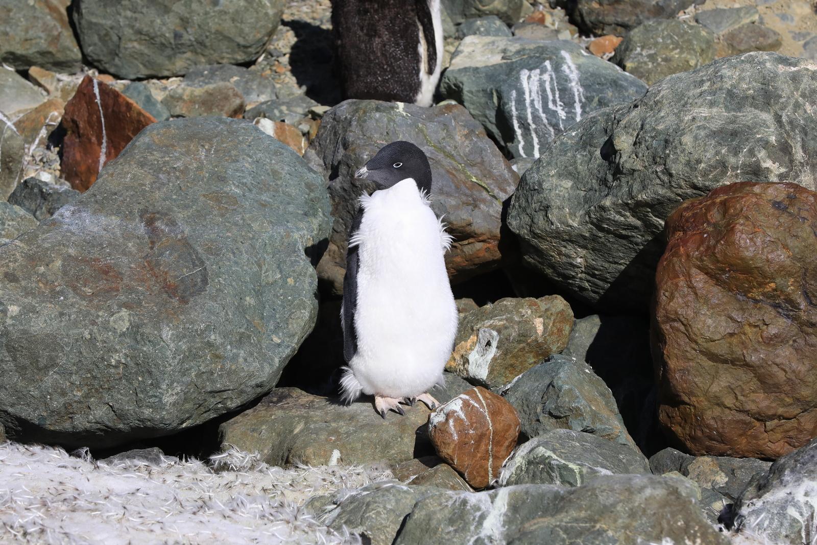 1702_Antarctique_01826_c_sm.jpg