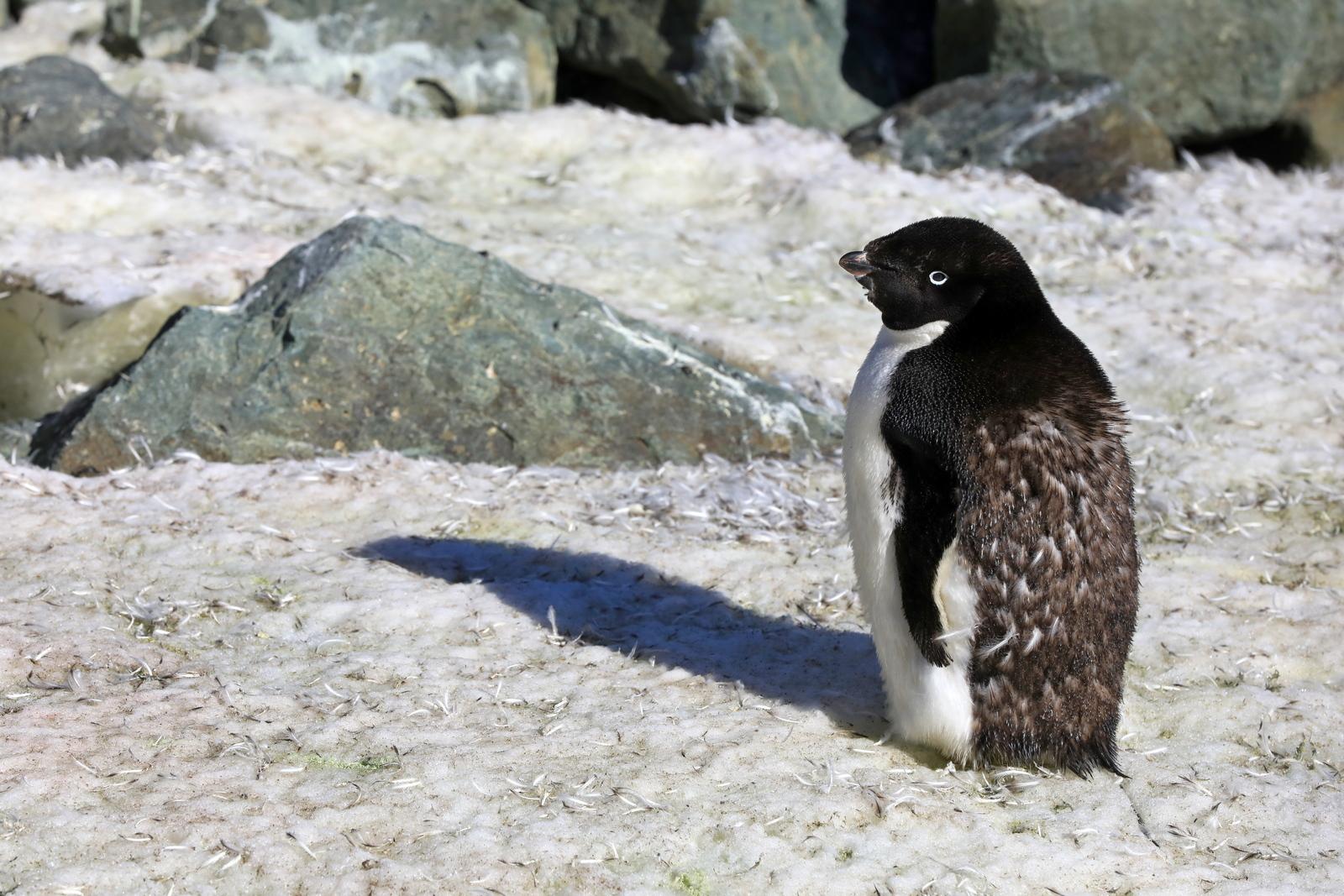 1702_Antarctique_01843_c_sm.jpg