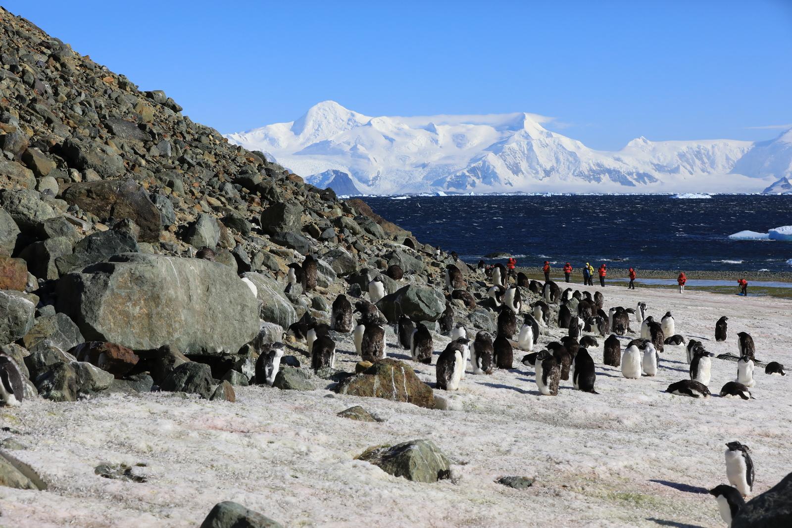 1702_Antarctique_01850_c_sm.jpg