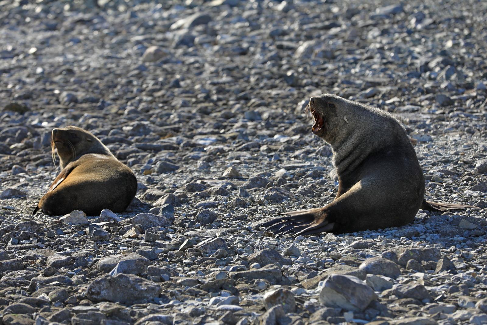 1702_Antarctique_01880_c_sm.jpg