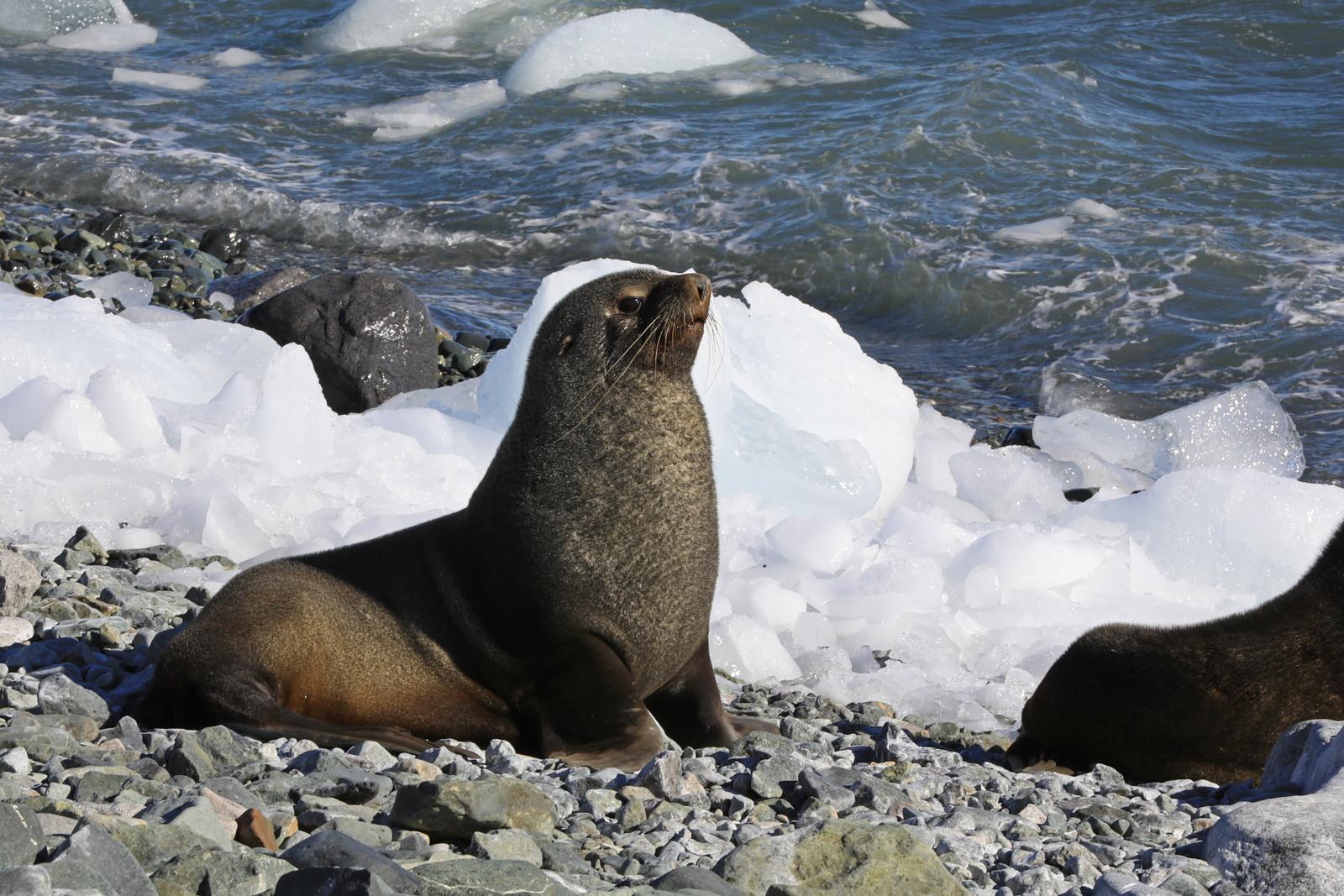 1702_Antarctique_01987_c_sm.jpg