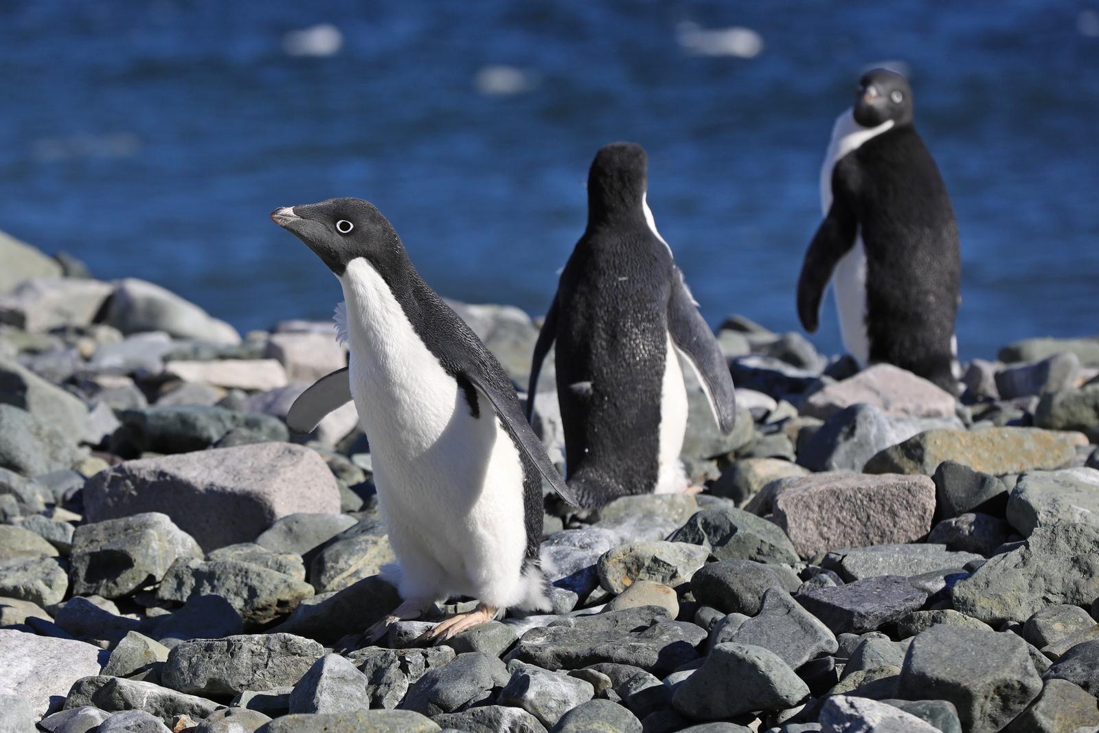 1702_Antarctique_02029_c_sm.jpg