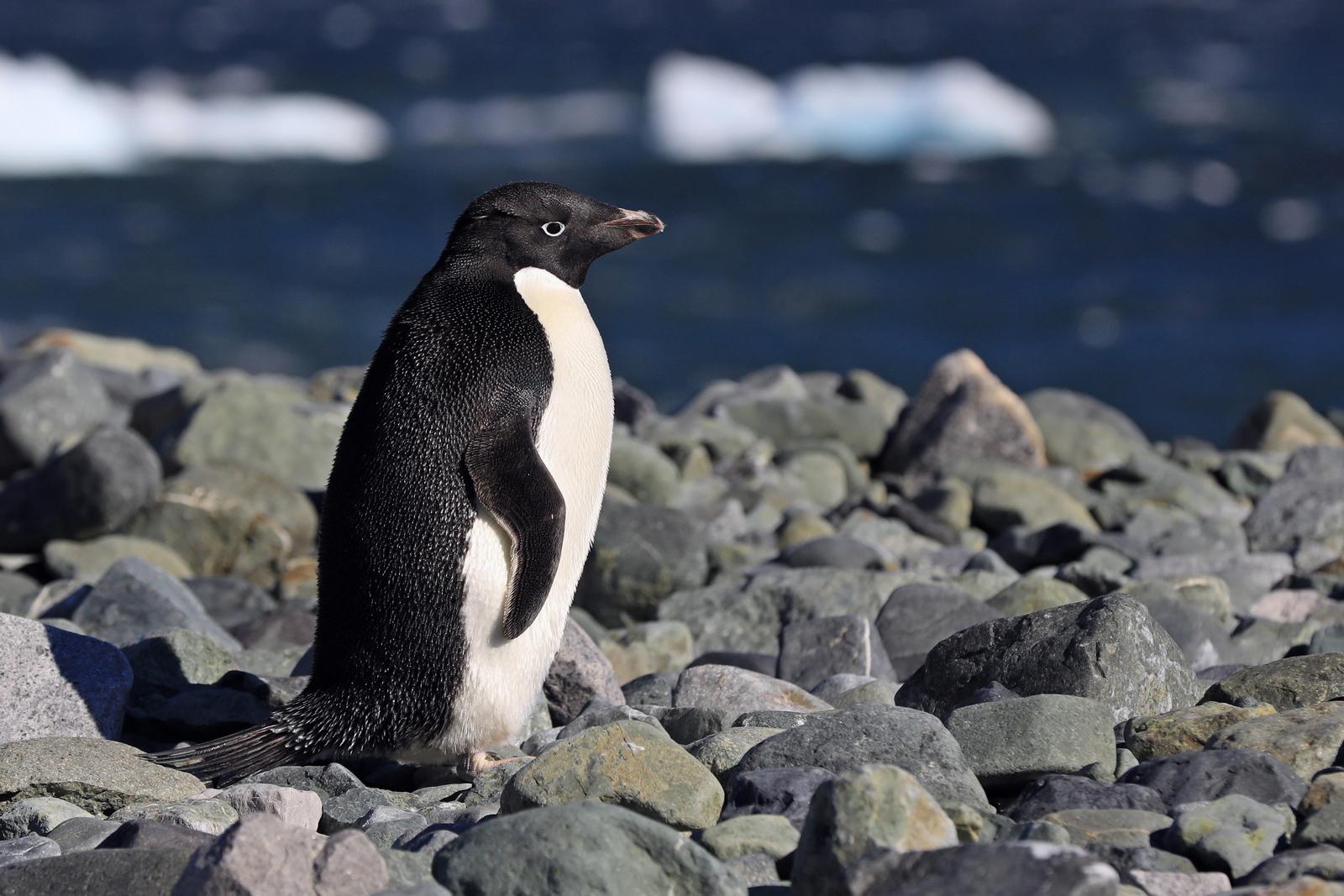 1702_Antarctique_02036_c_sm.jpg