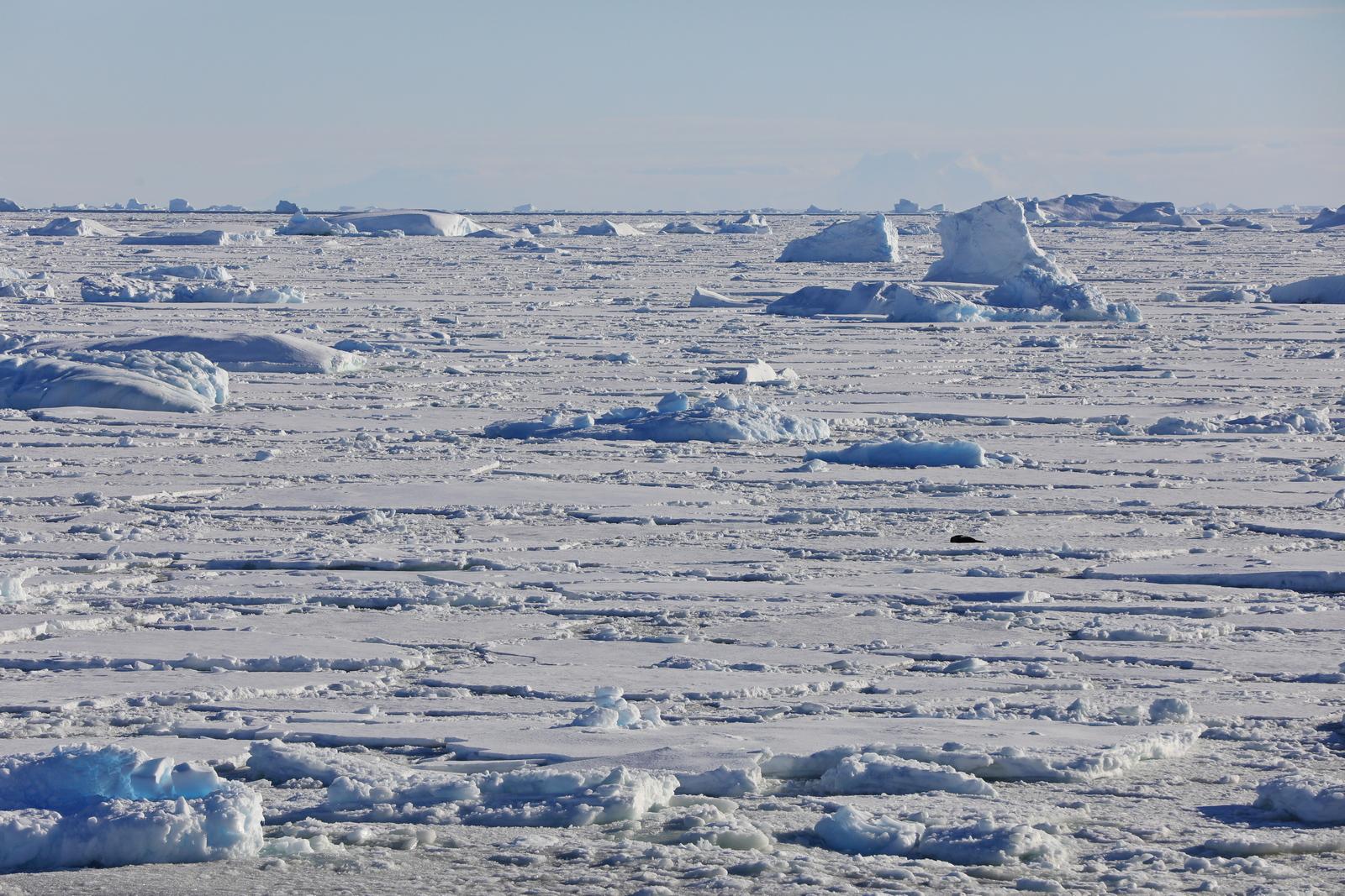1702_Antarctique_02836_c_sm.jpg