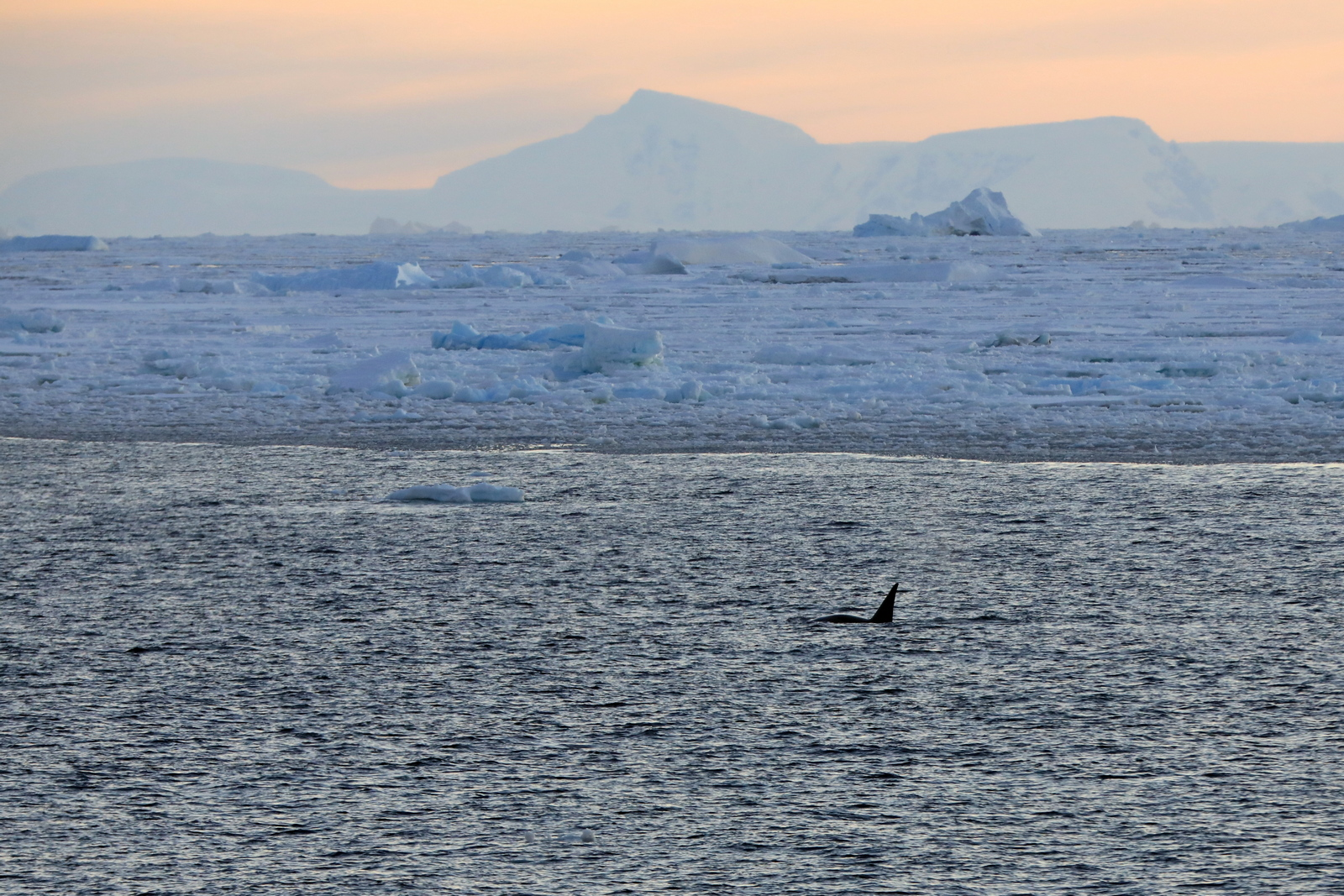 1702_Antarctique_03176_c_sm.jpg
