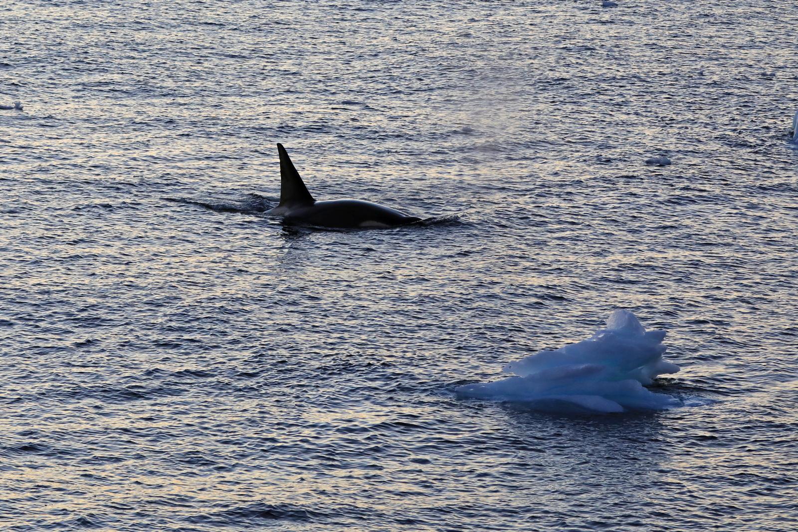 1702_Antarctique_03223_c_sm.jpg