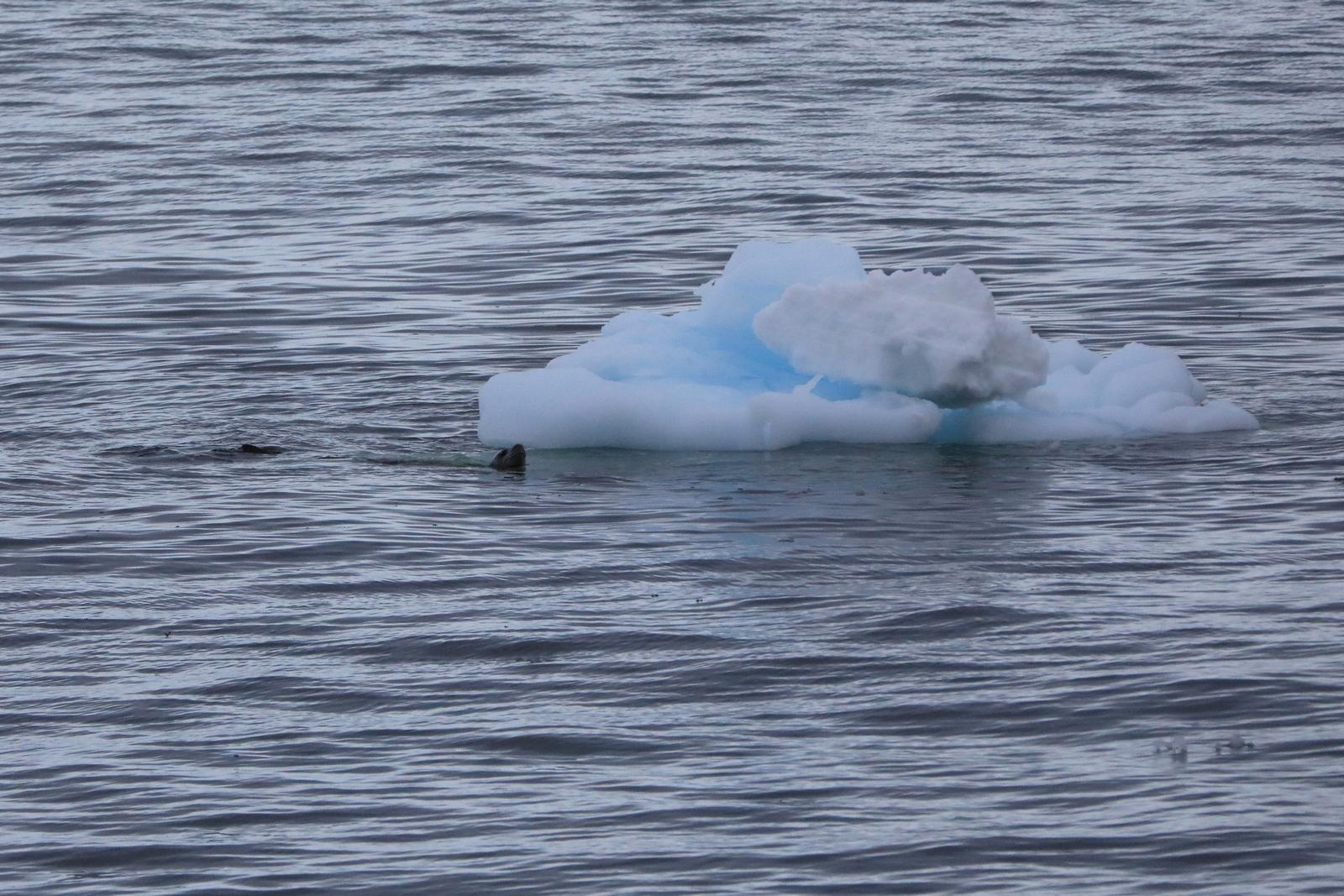 1702_Antarctique_03820_c_sm.jpg
