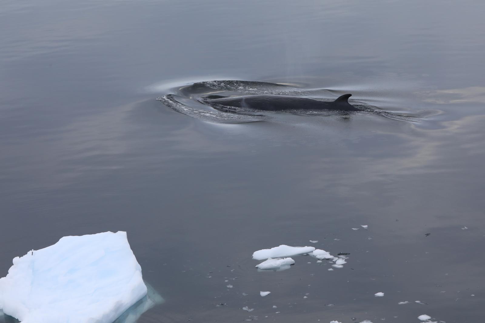 1702_Antarctique_03962_c_sm.jpg