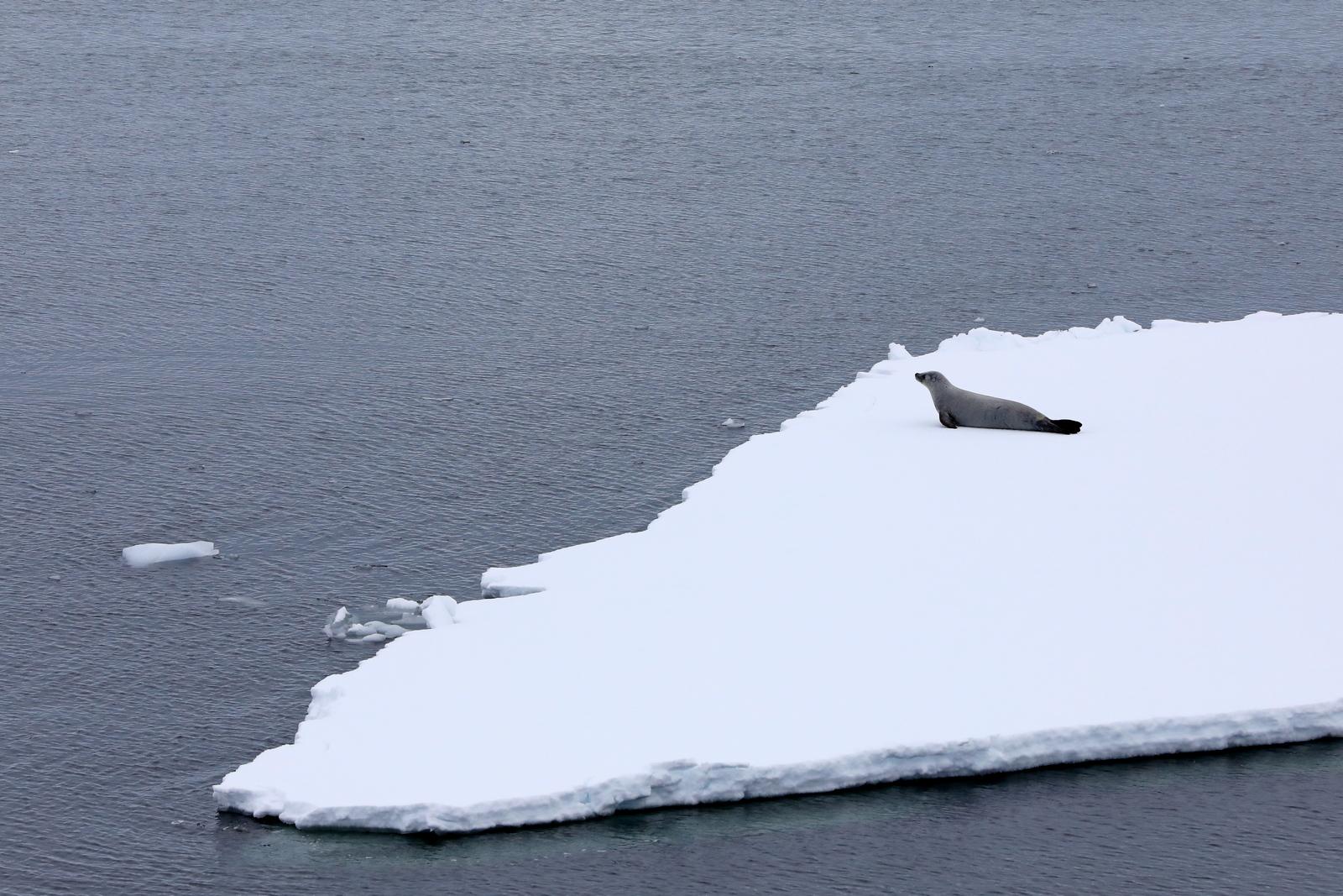 1702_Antarctique_04046_c_sm.jpg