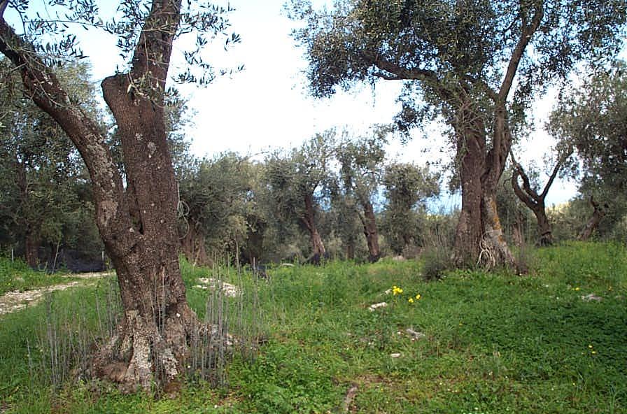 Sarakiniatika old (1).jpg