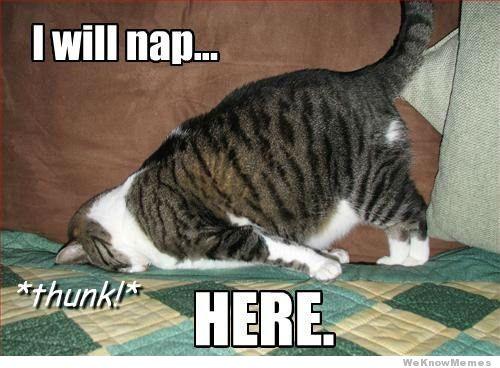 cat-nap-face-down