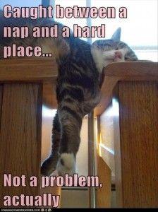 cat-nap-hard-place