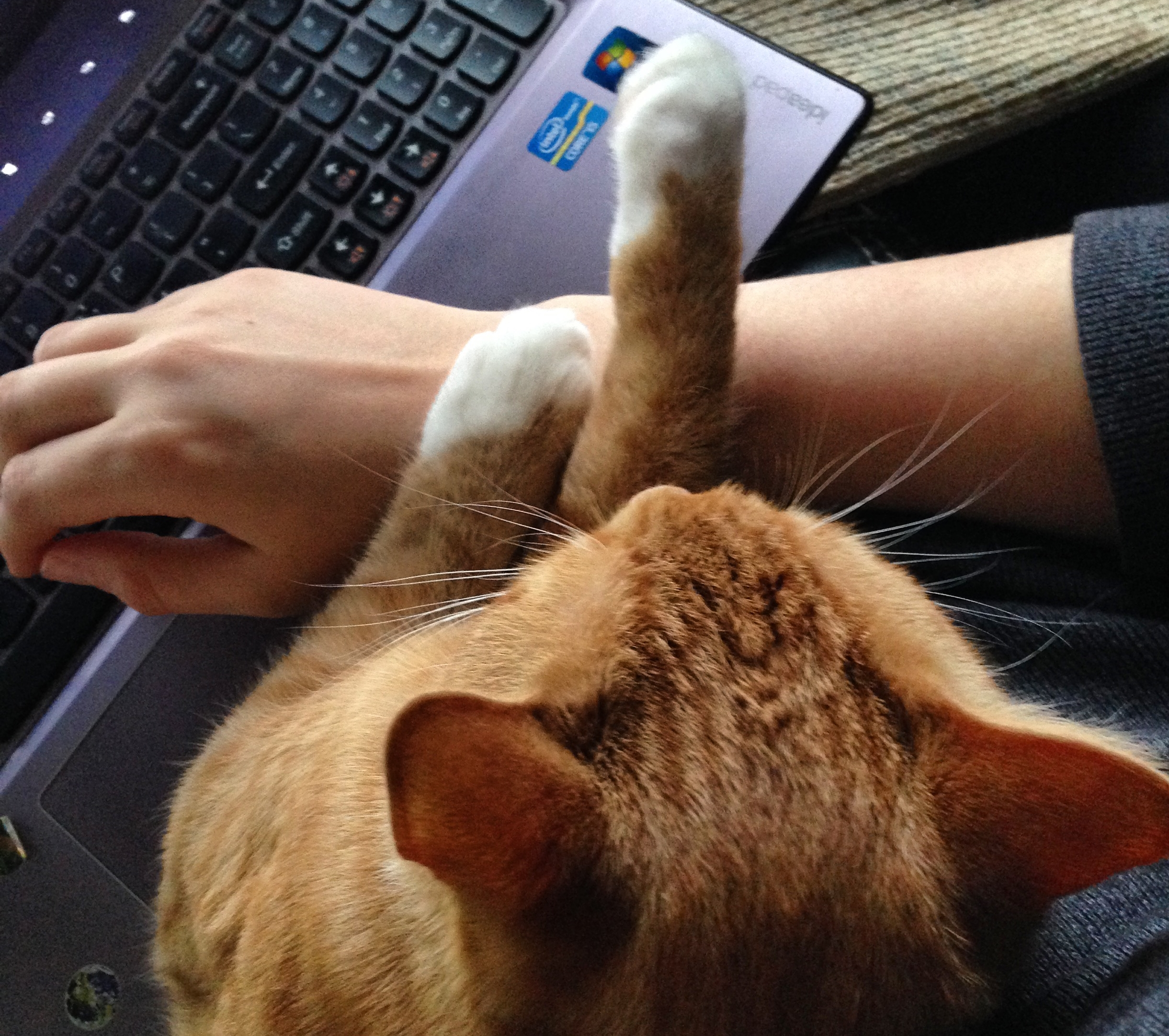 I swear it helps me work when he sits on my lap like this! Particularly when he starts writing poetry. A poem by Wilfred goes something like this: kja;hoijsf; hisofak;lsdjf oh aifihoj ji;lf;l;ajlkf jkl;