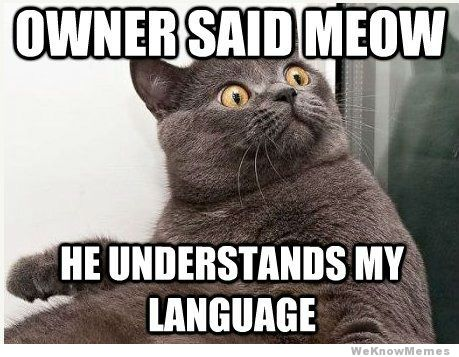 meow-cat-meme