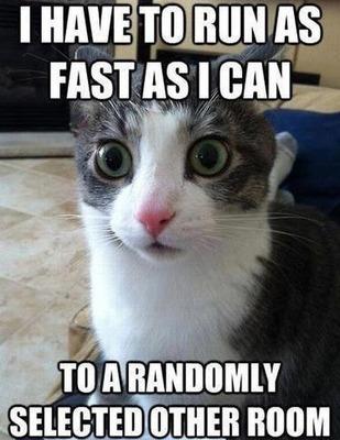 running-cat-meme