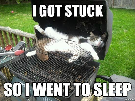 cat-grill-stuck-meme