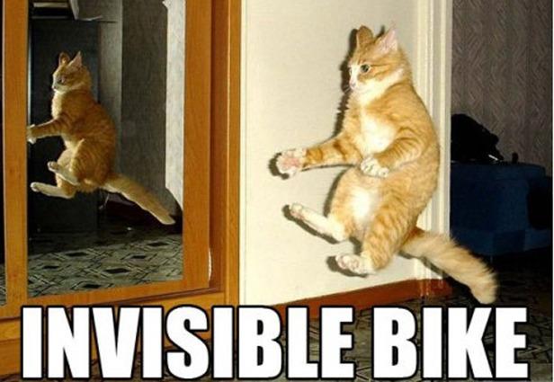 invisible-bike-cat-meme