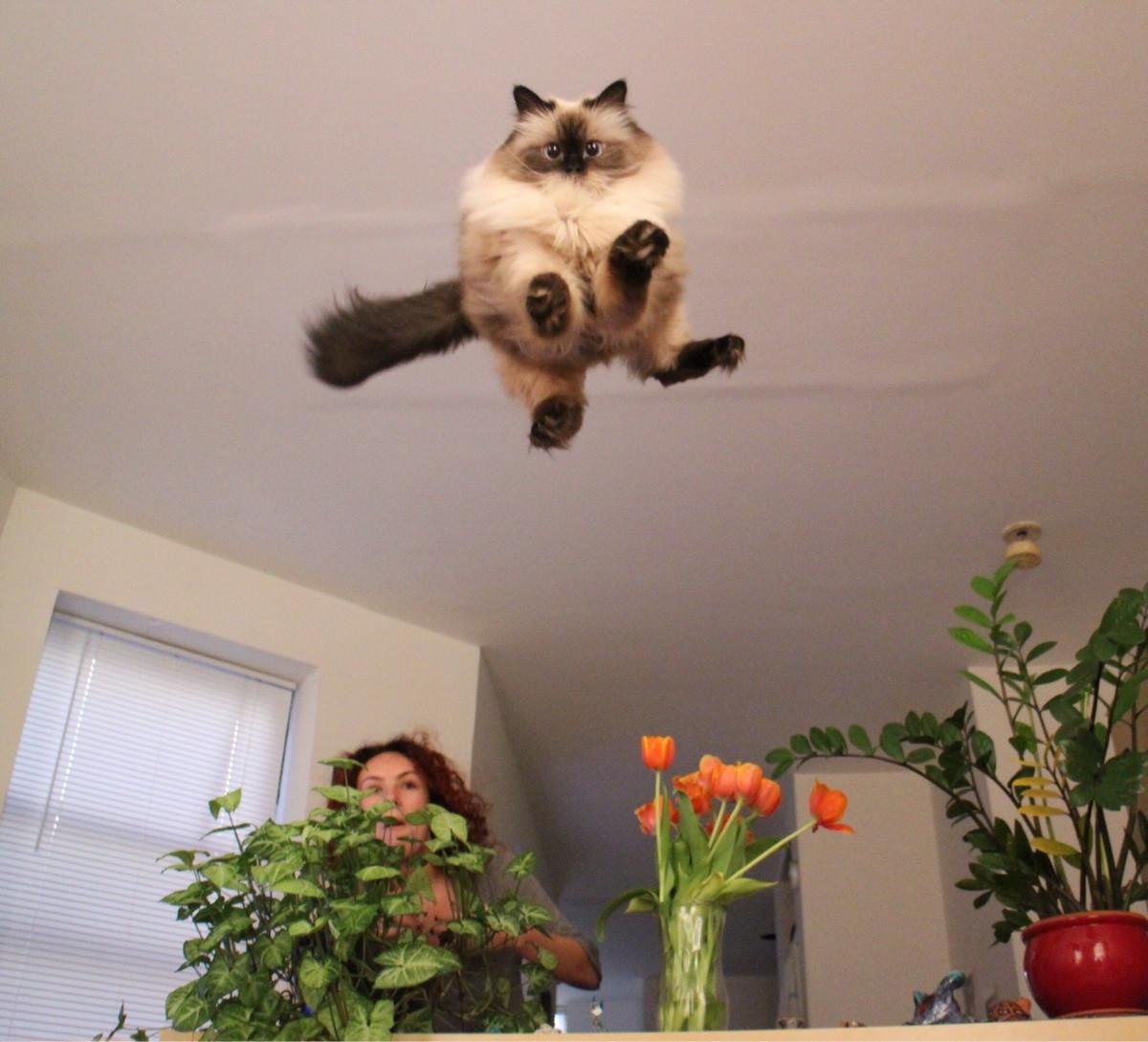 jumping-cat-meme-1