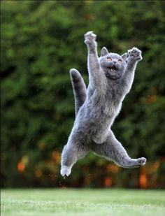 jumping-cat-meme-3