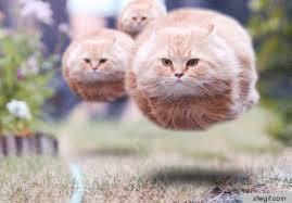 jumping-cat-meme-4