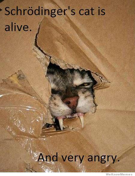 schrodinger-cat-meme-2