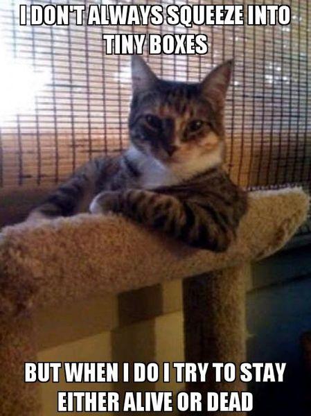 schrodinger-cat-meme-3