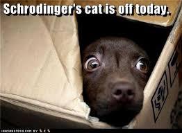 schrodinger-cat-meme-4