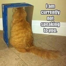 orange-cat-meme