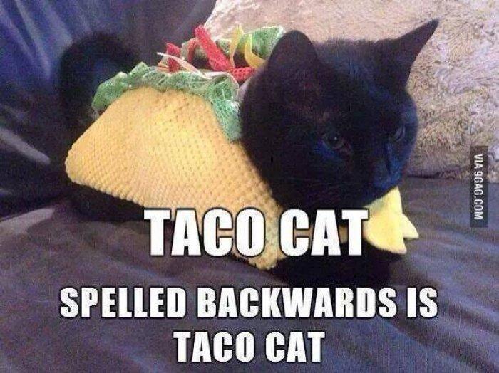 taco-cat-meme