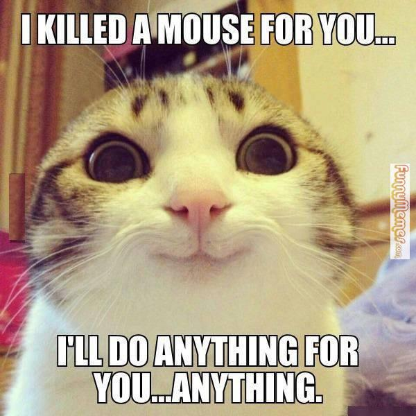 you-cat-meme
