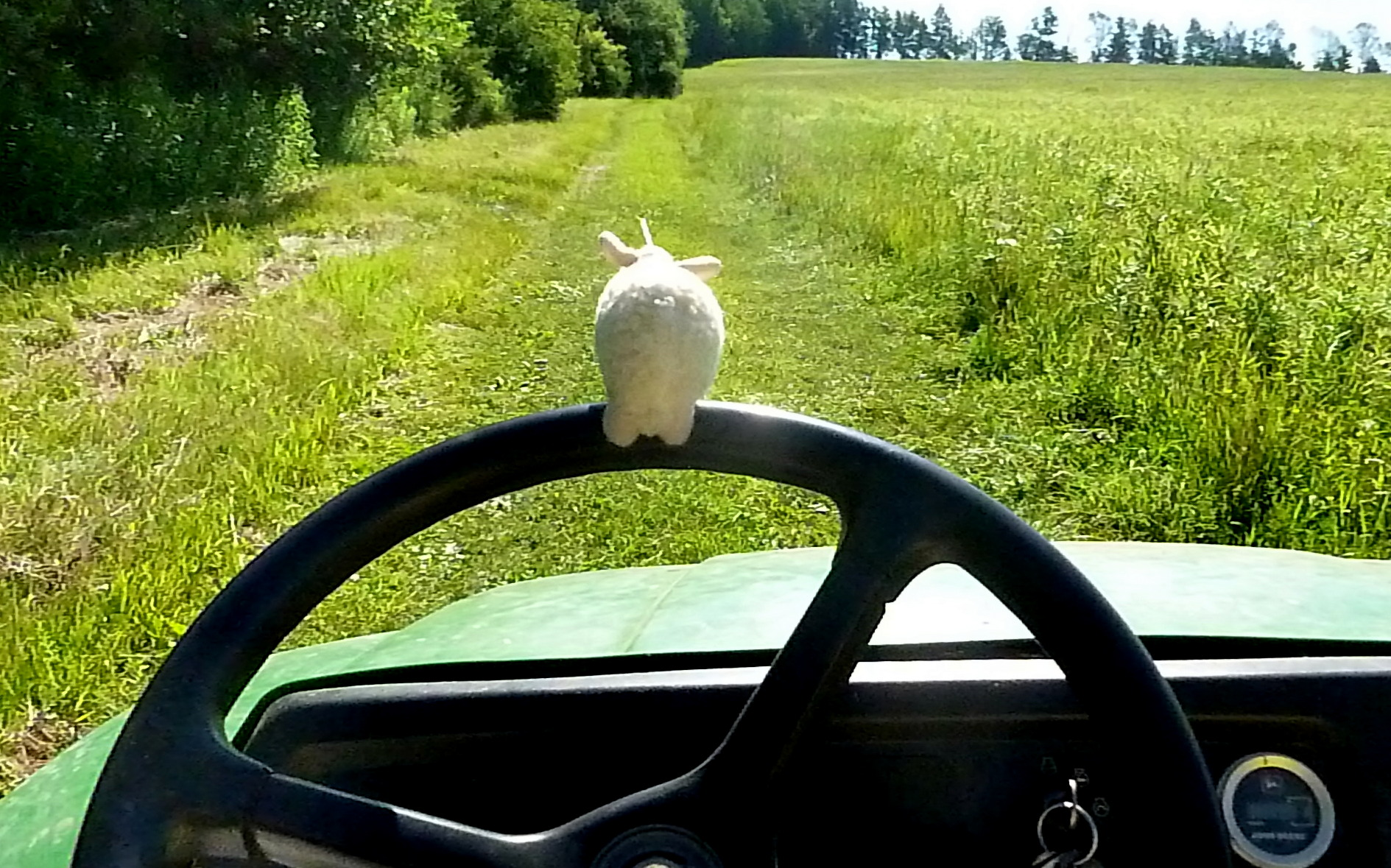 Rutherford is great at driving the Gator. He likes to feel the wind in his fur.