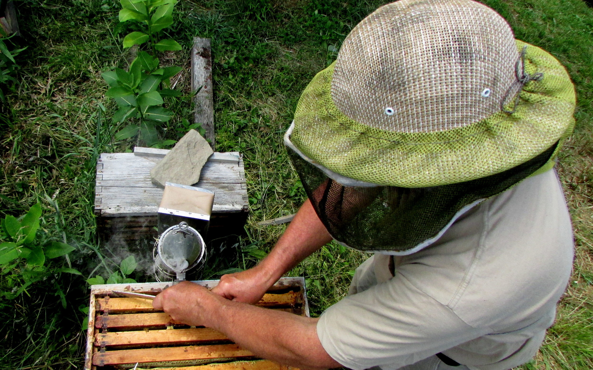 I got some great action shots of Dad looking all beekeeper-y.