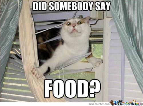 food-cat-meme