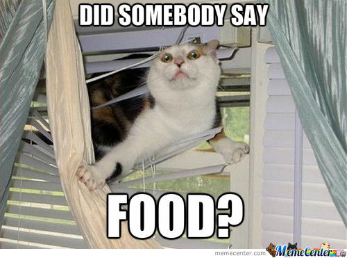 Get Well Soon Cat Memes