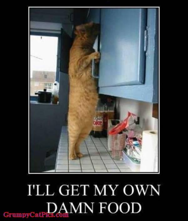 cat-meme-get-my-own-damn-food