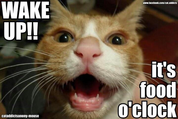 cat-meme-food-o-clock